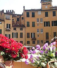 Tour  nel centro storico di Lucca