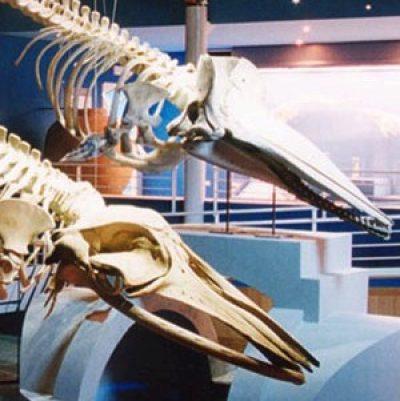Museo del Mare e Acquario città di Piombino