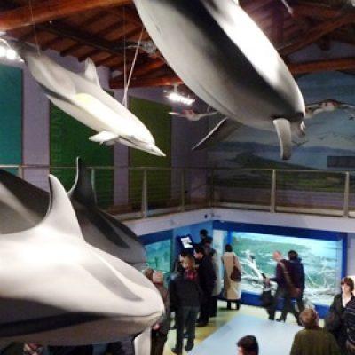 Museo di Storia Naturale della Maremma