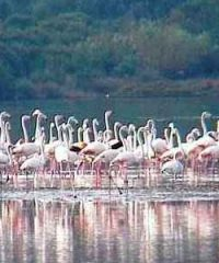 Riserva Naturale della Laguna di Orbetello
