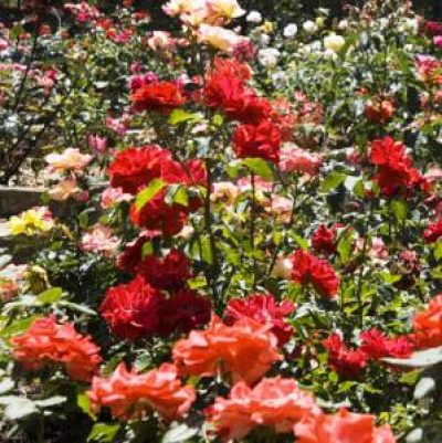 "Roseto Botanico ""Carla Fineschi"""