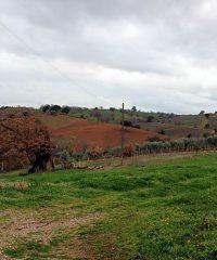 Farmland in Maremma